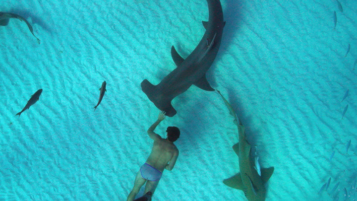 watch Sharkwater Extinction Official Trailer