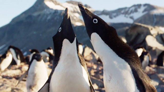 watch A Special Look at Disneynature's Penguins