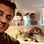 Sylvester Stallone kept the two turtles from Rocky